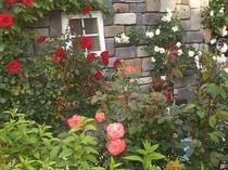 半地下の窓とバラの風景 地下には、おいしいワインがいっぱい眠っています(-_-)zzz