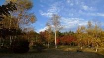 八ヶ岳テラスの裏側は、テニスコート越しにこの森が見えます。整備され、素敵な森の中をお散歩ができます。
