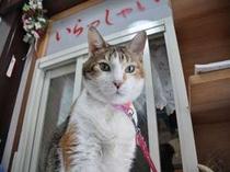 天城・看板猫♪
