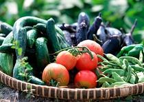 地元の新鮮な野菜