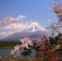 富士山:写真参照