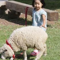 *伊香保グリーン牧場/メェメェ、羊さんと一緒に園内をお散歩♪
