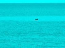 目の前の海で噂のイルカくんの気持ちよく泳いでいる写真です