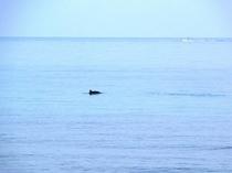 イルカ君の姿1