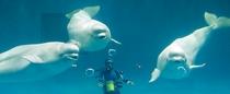 幸せのバブルリングで有名な白イルカがいる「しまね海洋館アクアス」