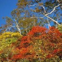◆秋のニセコ