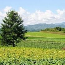◆夏のニセコは緑がいっぱい!