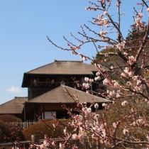 【日本3大庭園 水戸偕楽園】 車で43分。2016年の梅祭りは2月20日より3月31日まで開催