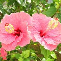 沖縄ならではの花々の景色をお楽しみ下さい。
