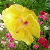 *〜ホテル周辺・南国の風景〜沖縄ならではの花々をお楽しみ下さい。