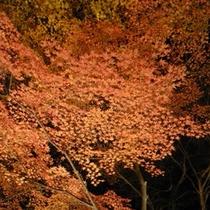 月の石もみじ公園の紅葉ライトアップ(11月中旬〜下旬)お車で約15分