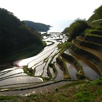 波戸岬の自然・景色
