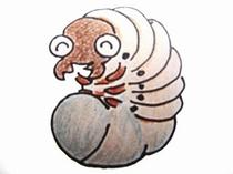 カブトムシ幼虫(イメージ)