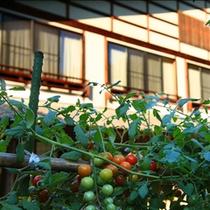 ■庭には自家菜園