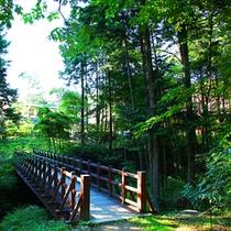 ■庭には川があり橋がかかっています