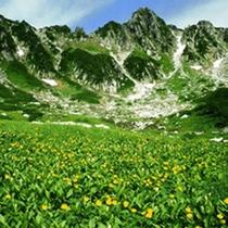 夏の千畳敷。駒ヶ岳ロープウェイで別世界へGo!