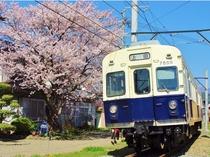 別所線と桜