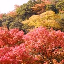秋の紅葉-龍門の滝