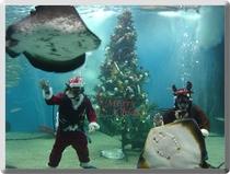 越前松島水族館クリスマス