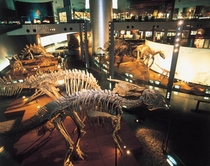恐竜博物館館内