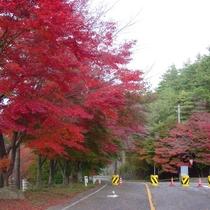■奥琵琶湖パークウェイ
