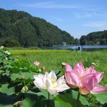 ■【夏】中綱湖のハス