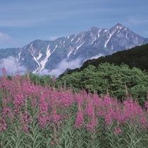 ■【夏】黒沢高原のヤナギラン