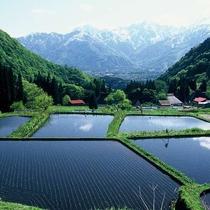 ■【夏】鬼地区棚田の風景