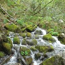 ■【夏】北アルプスの湧水