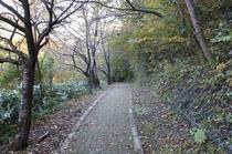 ケヤキの森散策路