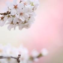 春イメージ写真