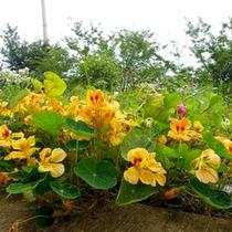 *敷地内には、いろいろなお花が咲いています。ちょっとした散策も楽しめます。