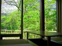 新緑の個室
