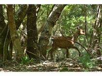 裏山には 鹿も