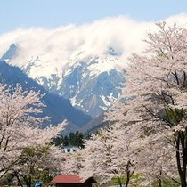 【桜と谷川岳】
