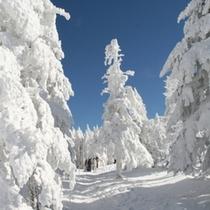 北八ヶ岳ロープウエイ往復券プラン冬