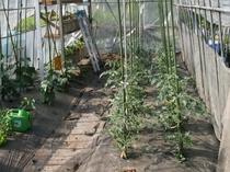 自家ハーブ園夏野菜の植え付け
