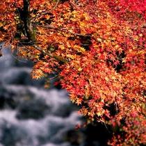 【秋の紅葉】