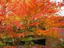大浴場の紅葉