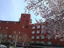 外観(桜)