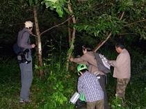 深夜の樹液ツア-