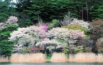 白河 南湖公園 水ぎわの春