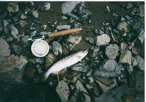 渓流釣り、岩魚