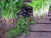 自家野菜-3