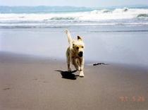愛犬マリィ