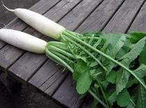 自家野菜-4