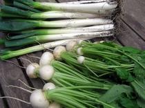 自家野菜-5