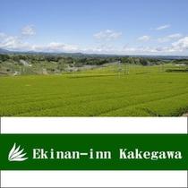 ■掛川と言えばお茶、おいしい深蒸し茶ご用意しております
