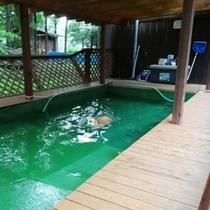 サービス_ワンちゃんが泳げるプールも完備! (1)