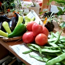 食材_新鮮野菜がたくさん!
